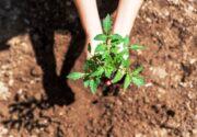 Organik Solucan Gübresi ile Yetişen Meyve ve Sebzeler