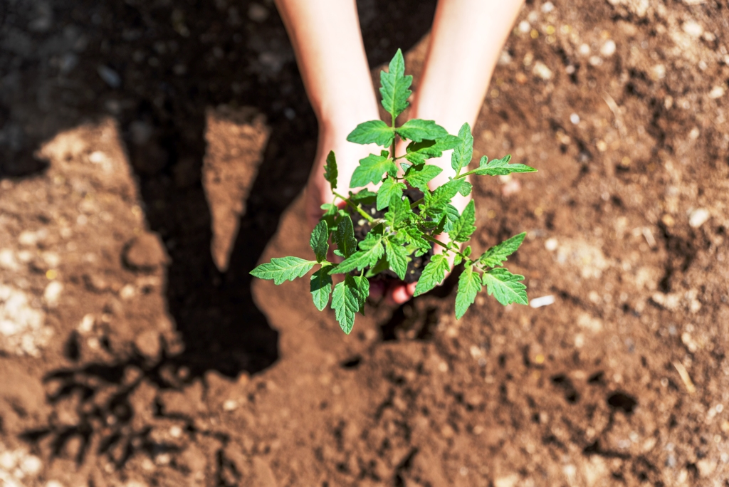 organik-meyve-sebze